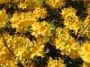ogrod-botaniczny-9